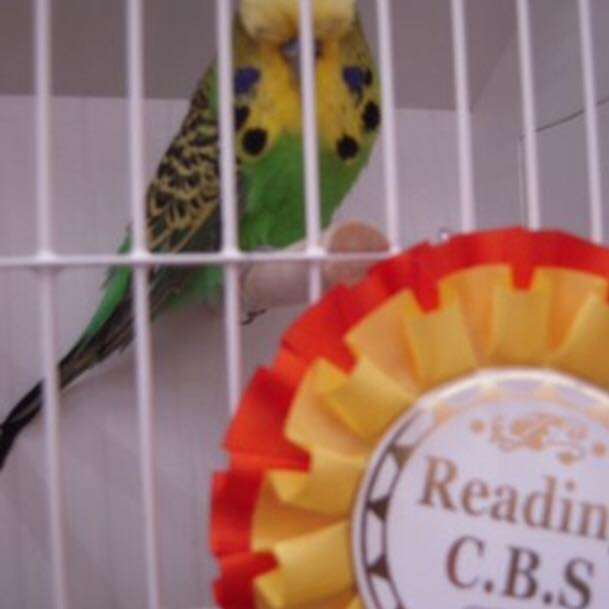 Reading Caged Birds Society