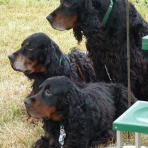 Swallowfield Show - Dog show 2