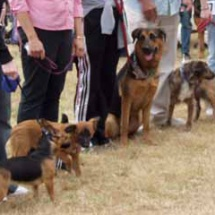 Swallowfield Show - Dog show 4