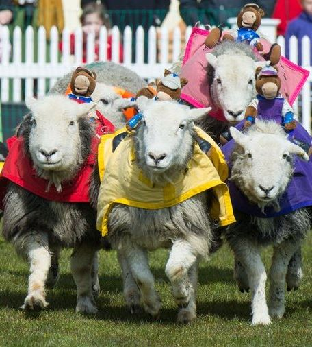 Swallowfield Show - Events 7