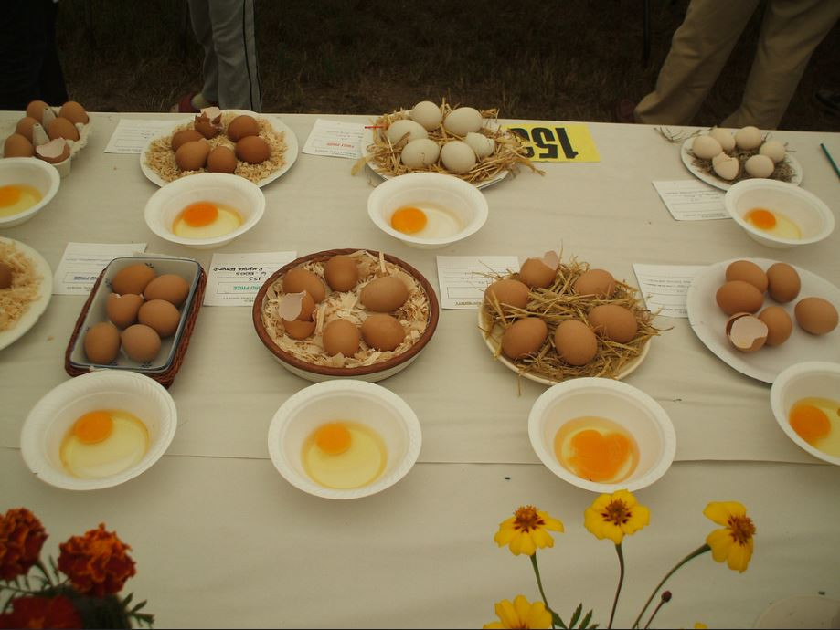 Swallowfield Show - Horticultural 1