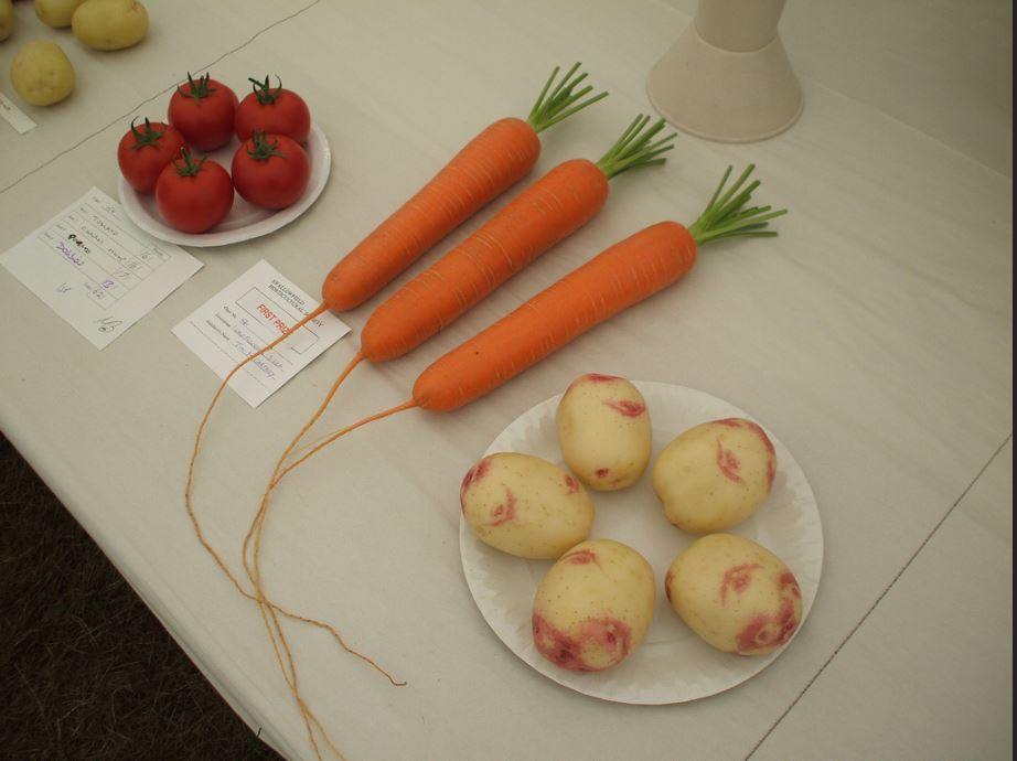 Swallowfield Show - Horticultural 2
