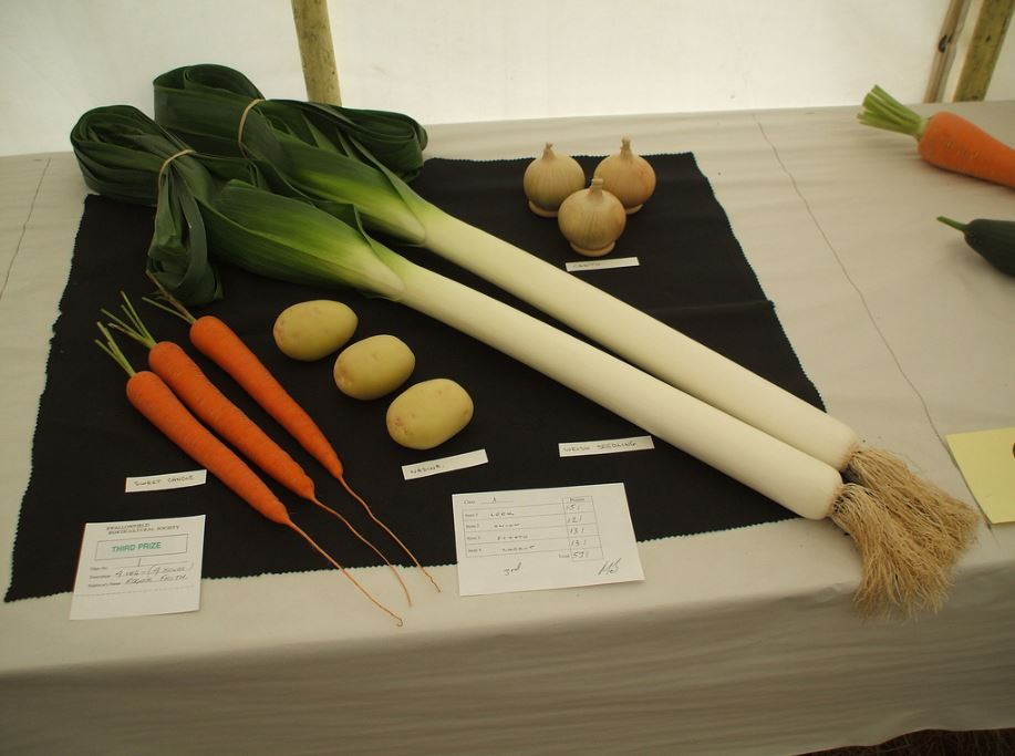 Swallowfield Show - Horticultural - Copy