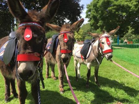 donkey-2-web