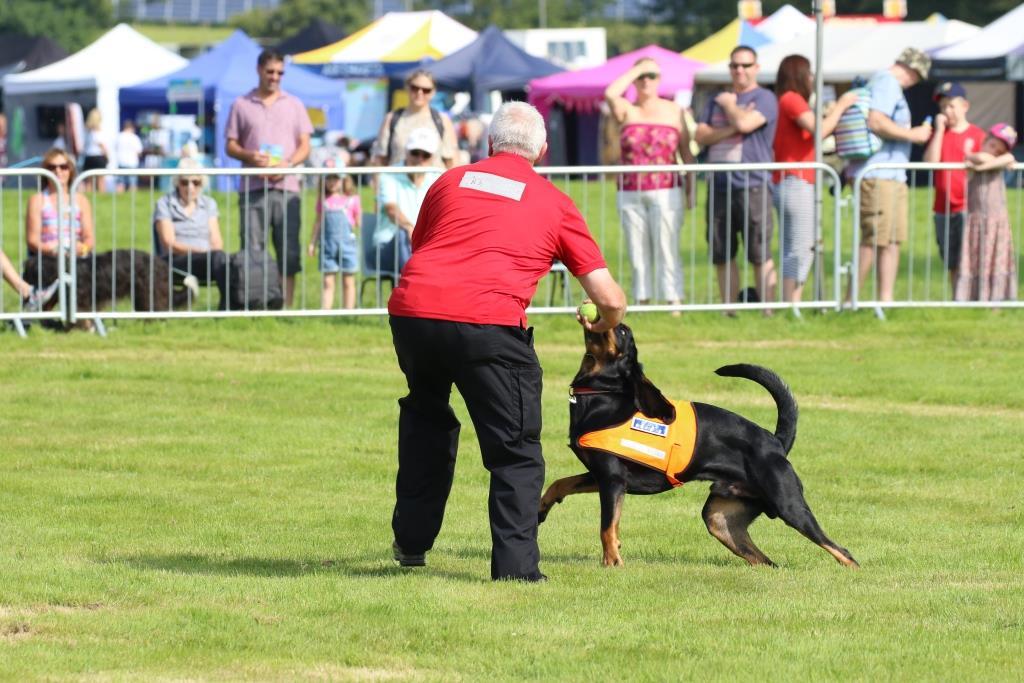 Berkshire Search & Rescue Dogs