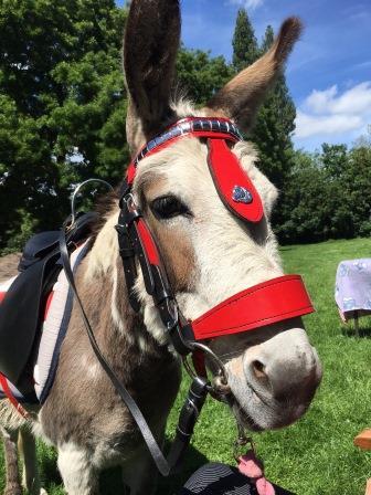 donkey-1-web