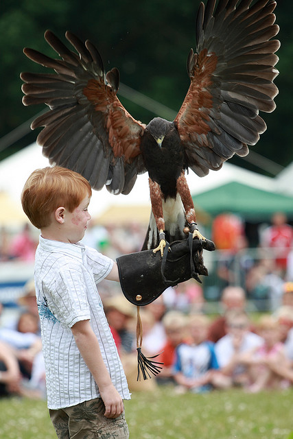 Ye Olde Redtail Falconry Display