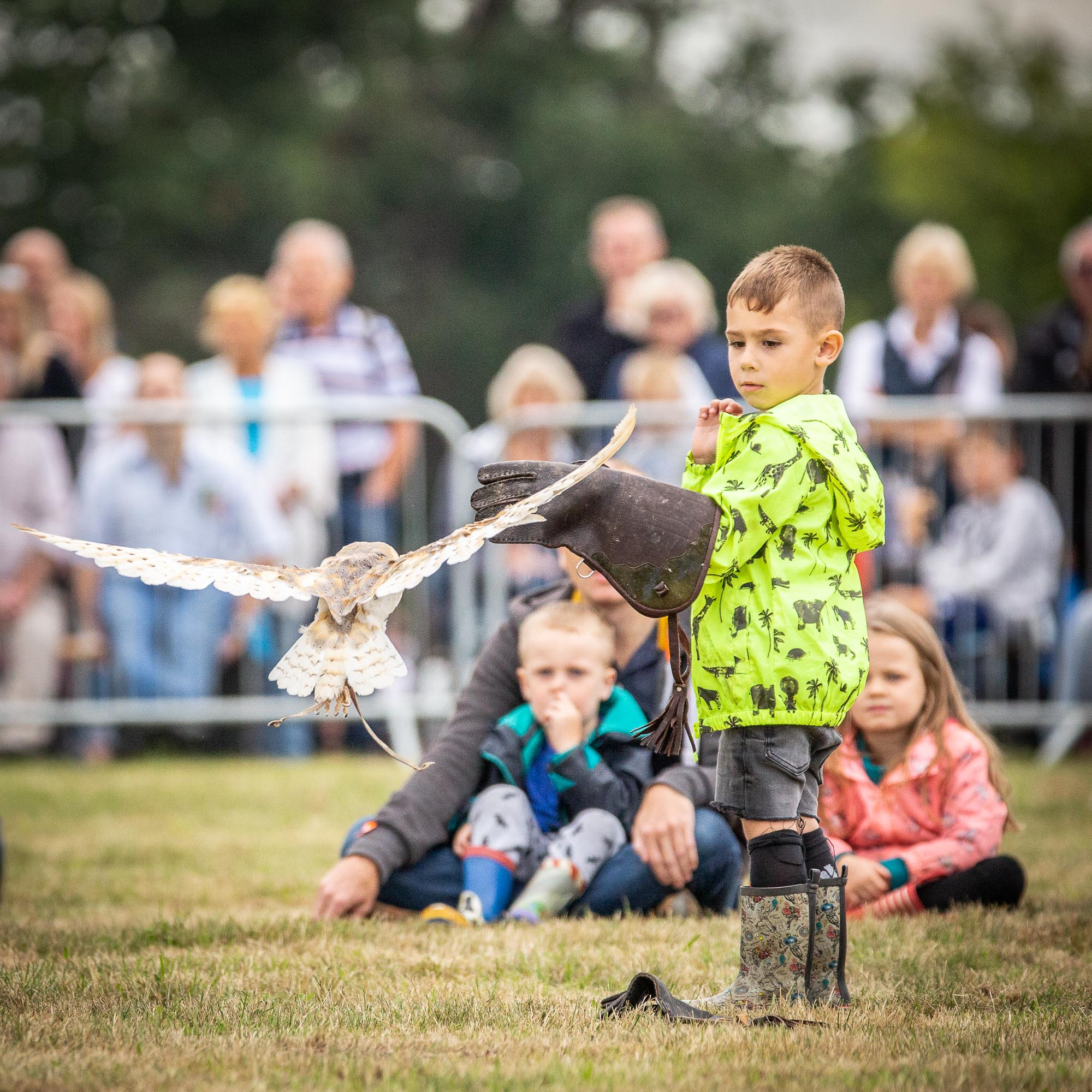 Falconry-Display-0103