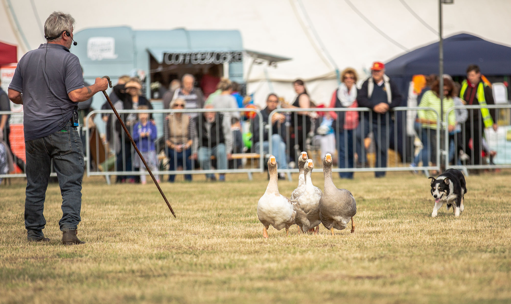 Sheep-Dog-Show-0182